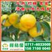 黄冈红安县特早柑子销售价格_红安县早熟柑桔产地价格