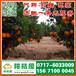 广州荔湾区特早蜜橘供应产地_荔湾区早熟柑子市场价格