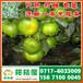 唐山市路南区特早蜜橘供应产地_路南区特早柑桔市场价格