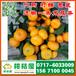 广州市天平水果特早柑子价格行情_天平水果特早蜜桔产地价格
