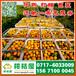 济南堤口果品特早蜜桔产地直销_堤口果品早熟柑子批发价格