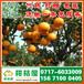 特早柑桔直供电话156-7100-0405黄南特早密橘水果批发