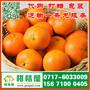 黑龙江早熟柑桔果品批发,双鸭山迟熟密桔产地电话156-7100-0405图片