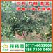 西藏迟熟柑橘产地直供,昌都迟熟柑橘代收电话156-7100-0405