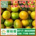 西藏昌都特早橘子代办电话156-7100-0405特早橘子产地价格