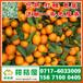 衢州早熟密桔供货产地/衢州特早蜜橘产地代收/晚熟密橘销售价格