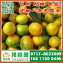 江苏早熟柑桔最新价格,淮安晚熟蜜桔代收电话156-7100-0405图片