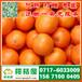 保定迟熟蜜橘批发市场,高碑店那里有中熟柑橘直供电话156-7100-0405