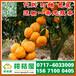 和田迟熟密橘电话0717-6033009和田水果蔬菜批发迟熟密橘多少钱