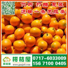 湖北枝江迟熟柑桔批发图片