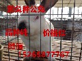 购买一组獭兔种兔需要多少钱,一只母兔一年有多少钱的收益图片