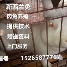 贵州哪里有养兔场,新西兰肉兔养殖效益分析及杂交野兔养殖前景