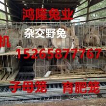 安徽肉兔养殖场-2018年最新兔子价格多少钱一只养肉兔一年赢利多少