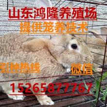 现在养殖肉兔什么品种市场最好,新西兰种兔走势市场价格