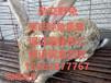 陕西肉兔行情肉兔最新价格今日肉兔养殖前景