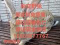 肉兔市场需求增加提高肉兔养殖效益扩大养殖基地规模图片