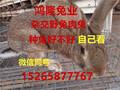 广西南宁哪里有兔子养殖场,柳州养殖兔子利润杂交野兔多少钱一只图片