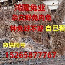 全国肉兔价格_今日最新全国肉兔价格行情走势肉兔养殖效益分析图片