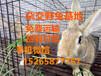 湖北最大养兔基地杂交野兔价格及养殖兔子前景