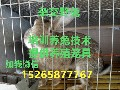 四川杂交野兔场,四川杂交野兔市场价格,四川杂交野兔养殖效益图片