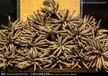 龙门回收冬虫夏草,龙门哪里回收冬虫夏草价格高