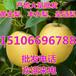 今年黄金梨批发多钱一斤、哪里梨便宜好吃、黄金梨批发价格