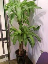 办公室花卉绿植日常养护