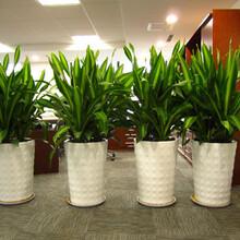 净化空气吸收雾霾的植物