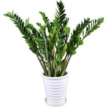 北京花卉市场买花卉绿植必读