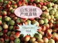 山东油桃批发市场油桃降价了图片