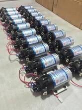 DP-60微型电动隔膜泵