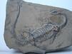 哪里有鉴定化石的地方化石价值多少钱