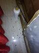 平江县饭店灭鼠灭蟑服务服务周到图片