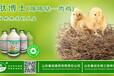 家禽用营养药有哪些,鸡鸭用营养素是什么?鸡鸭促生长用国家专利产品——肽博士