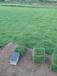 福州市罗源县起步镇潘善兵草皮专业种植销售公司