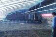 温室大棚自走式小型育苗喷灌机温室大棚小型育苗喷灌机温室大棚自走式育苗喷灌机