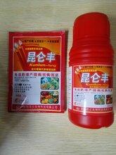 營養抗病葉面肥/昆侖豐/昆侖生物廠家供應/大包裝葉面肥