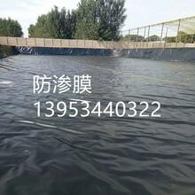 广州电厂调节池防渗膜含税价图片