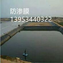 浙江养鱼池护坡防渗膜施工现场图片