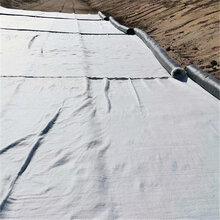 纳基5000g膨润土防水毯图片