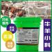 牛一天吃多少料,牛羊小料催肥促長劑中農大小料增重育肥牛