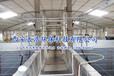 工厂化水产养殖设备-TH-RAS循环水养殖系统