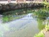 西安景观水处理设备西安景观鱼池水处理设备鱼池用水处理设备