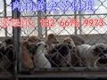 养殖100只肉狗需要投资多少钱?图片