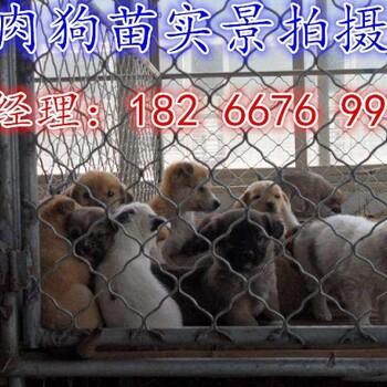 杂交肉狗分什么品种哪里有卖肉狗苗的