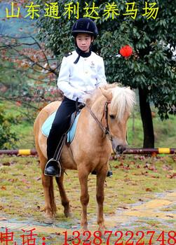 养马场出售骑乘马一匹马的价格一匹马的ag系列产品|官方成本