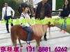 神獸羊駝出售出租雙峰駱駝幼崽價格北京哪里有賣羊駝的