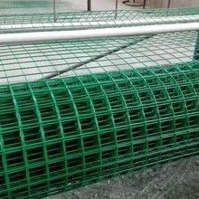 宁波电焊网厂家供应批发PVC电焊网荷兰网价格优惠图片