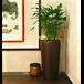 办公室植物租摆绿化养护植物租赁花木租摆