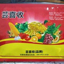 河南小麥增產套餐蕓喜收,預防病害增產高,大田廣譜套餐